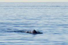 Baleias migratórias em Los Angeles: de onde observar  O início do ano é a melhor época para observar baleias a partir da costa de Los Angeles. É um espetáculo observar esses imensos animais nadando tão perto da costa, e aqui estão as nossas dicas para observá-las. É possível encontrar baleias na costa da California o ano inteiro, mas a melhor época é de janeiro a março, período em que elas estão migrando das águas geladas do Alaska para o clima mais ameno do México.