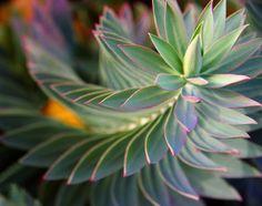 flora-file:    Patterns… (by Georgio R.)