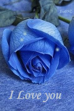 Blue Flower And Star Of David