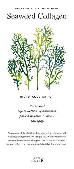 Seaweed Collagen