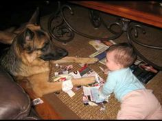 German Shepherd and Baby: You're My Best Friend
