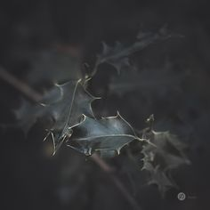 So hatte auch ich mir während eines Streifzug's durch den Herbstwald vorgenommen, nach Motiven Ausschau zu halten, die einem nicht sofort in's Auge fallen.