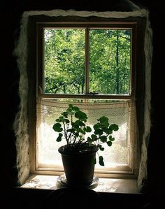 This Ivy House  - pagewoman:   Geranium