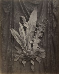 Charles Aubry, An Arrangement of Tobacco Leaves and Grass, 1864, J. Paul Getty Museum