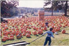 Corn Maze, Pumpkin, Craft Ideas, Crafts, Outdoor, Outdoors, Manualidades, Pumpkins, Diy Ideas