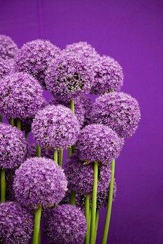 purplery