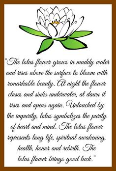 """The lotus flower grows in muddy water  and rises above the surface to bloom with  remarkable beauty. At night the flower  closes and sinks underwater, at dawn it  rises and opens again. Untouched by  the impurity, lotus symbolizes the purity  of heart and mind. The lotus flower  represents long life, spiritual awakening,  health, honor and rebirth. The lotus flower brings good luck."""""""