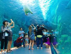 in the polar bear tunnel at Assiniboine Park Zoo. How Winnipeg Will Win Your Heart With These 5 Experiences via Canada Summer, Visit Canada, Canada Trip, Calgary, Animal Experiences, Canadian Travel, Sea To Shining Sea, New Museum, Nature