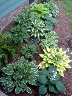 My hosta bed in 2012 Shade Garden, Outdoor Spaces, Beds, Art Projects, Landscaping, Home And Garden, Backyard, Design Ideas, Outdoors