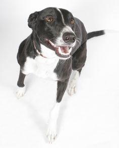Kipper copyright 2012 zendog pet portraits
