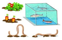 This aquaponic garden will bring your veggies and your fish tank into perfectly sustainable harmony. Use Arduino to take this set-up to the next level.