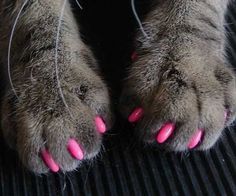 Protect your home furniture against your cat's destructive nature without the need to inhumanely de-claw her with these soft cat claw covers. These non-surgical caps fit over your cat's sharp nails - preventing her from attacking any guests or tearing up the couch.