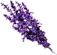 Lavender scents for the bath. Some people use lavender in their bath to treat circulation disorders and to improve mental well being. Lavendar contains an oil that seems to have a sedating effect and relaxes certain muscles. Lavender Honey, Lavender Scent, Lavender Flowers, French Lavender, Water Flowers, Purple Flowers, Journey Pictures, Pimples Remedies, Hair Remedies