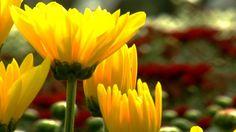 Manejo del suelo para el Cultivo de Flores - TvAgro por Juan Gonzalo Angel