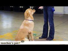 Clicker Training | Teacher's Pet With Victoria Stilwell