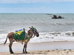 A donkey wears the colours of Brazil as it stands on a beach of Cumbucu, near Fortaleza on June 23, 2014, during the 2014 FIFA World Cup. (Photo by Aris Messinis/AFP Photo)