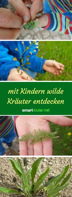 Auch für Kinder gibt es in der wilden Natur viel zu entdecken! Diese Pflanzen s… Even for children there is much to discover in the wild nature! These plants are non-toxic, delicious and can even be safely determined by children. Organic Gardening, Gardening Tips, Nature Sauvage, Wild Nature, Garden Care, Kraut, Dream Garden, Crafts To Do, Indoor Garden
