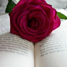 "Den zweiten Teil der ""Honigtot"" - Saga verschlingen... 👌👌👌😍😍😍 #love #instagood #photooftheday #katcreatescakes #cute #beautiful #me #happy #picoftheday #bookworm #girl #tagsforlikes #instadaily #books #summer #fun #smile #igers #instalike # #instamood #bücherwurm #marlene #reading #rose"