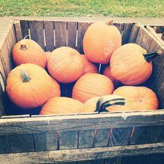Wordless Wednesday: Halloween Pumpkins