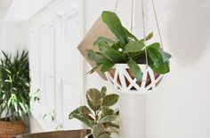 XX Hanging Planter planted with a stag horn fern. Handmade by Convivial ⚪️🌿