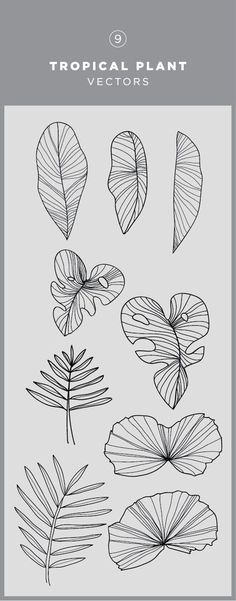 Illustrated tropical plant vector graphic / monstera leaf