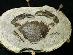 ▶ Copy of Fossil Crab Prep Time Lapse - YouTube