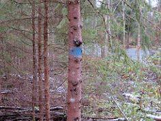 Metsanurme - Üksnurme ajaloo- ja loodusõpperada Water, Plants, Gripe Water, Plant, Planets