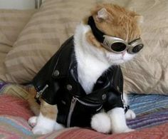 Pilot Cat | Community Post: 31 Cats That Are Doing Halloween Better Than You