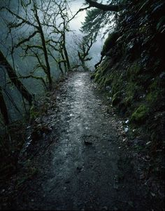 Eagle Creek Trail in the Columbia River Gorge, within the vicinity of Portland, Oregon.