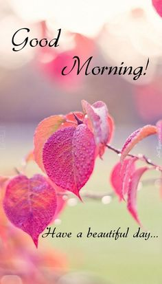 Good Morning Images Flowers, Good Morning Beautiful Images, Good Morning Roses, Good Morning Sunshine, Morning Pictures, Have A Beautiful Day, Good Morning Rainy Day, Good Morning Girls, Good Morning Funny