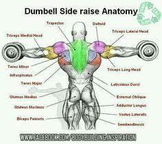 Dumbell Side Raise Anatomy