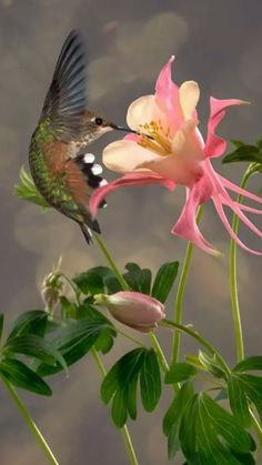 Find and save ideas about Colorful birds, Pretty birds, Beautiful birds and Tropical birds. Pretty Birds, Love Birds, Beautiful Birds, Animals Beautiful, Cute Animals, Beautiful Pictures, Amazing Photos, Pretty Art, Columbine Flor