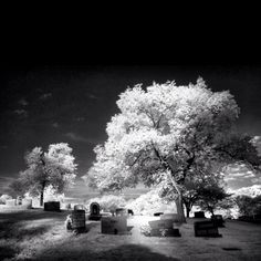 Arlington Cemetery, Infrared.