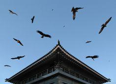 From Enoshima.  (www.schinster.com)