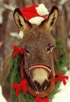 Christmas Donkey - almost as cute as the ornament that was fought over at the ornament exchange yesterday! Christmas Donkey, Noel Christmas, Christmas Animals, Country Christmas, Winter Christmas, Italian Christmas, Animals And Pets, Cute Animals, Barnyard Animals
