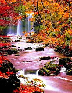is sharing a peek of local nature situated in the Allegheny Mountains of Tucker County WV (USA), Blackwater Falls State Park is named for… All Nature, Science And Nature, Amazing Nature, Fall Pictures, Nature Pictures, Beautiful Pictures, Beautiful Waterfalls, Beautiful Landscapes, Nature Landscape