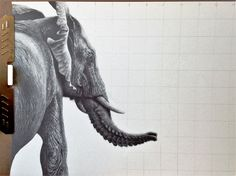 Working on an African Elephant graphite drawing. Reference photo by Greg Gillies. Strathmore Paper, Staedtler pencils/leads #graphite #drawings