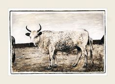 Marlene Neumann captures the beauty of South Africa's Nguni cattle. Characteristic patterned hides reflect the many variations of the African landscape Fine Art Photography, Landscape Photography, Neumann, Cattle, Moose Art, Artsy, African, Artwork, Hands