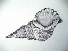 seashell drawings - Google Search