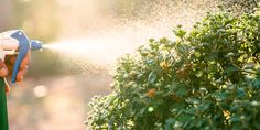 Weed, Outdoor Power Equipment, Exterior, Plants, Gardening, Projects, Log Projects, Blue Prints, Lawn And Garden