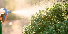 Πώς χρησιμοποιούμε το ξύδι στα φυτά του κήπου | Τα Μυστικά του Κήπου Weed, Outdoor Power Equipment, Exterior, Gardening, Decoration, Projects, Decor, Log Projects, Lawn And Garden
