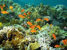 Tubataha reef, south of Palawan Philippines
