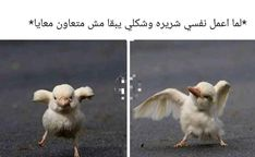 Funny Photo Memes, Funny Picture Jokes, Crazy Funny Memes, Funny Relatable Memes, Funny Texts, Arabic Memes, Arabic Funny, Funny Arabic Quotes, Funny Images
