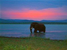 Lake Jozini Door Steps, Game Reserve, Beautiful Scenery, Man Cave, South Africa, Wildlife, Elephant, Holidays, Eye