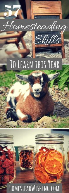 What homesteading skills do you know? Check out this extensive list of homesteading skills to learn. Homesteading where you are is possible!
