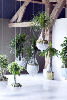 kamerplanten op stam