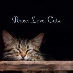 Peace, Love, Cats  <3