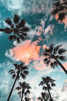 #palmy#ładnywidok❤