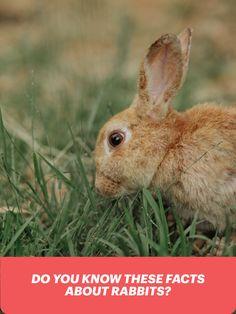 rabbit guides care tips and information #rabbits #bunny Rabbit Facts, Rabbit Behavior, Rabbit Eating, Wild Rabbit, House Rabbit, Natural Instinct, Rabbit Toys, Boredom Busters, Animal House