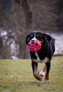 Wimbledon Common, Photo Tips, Dog Photos, Best Games, Pets, Animals, Spaces, Animales, Animaux